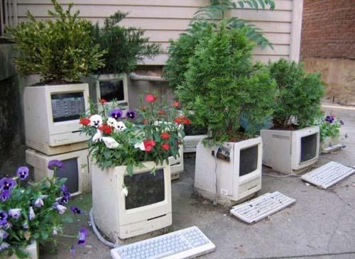 кактус и компьютер